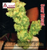 Medical Sour Diesel Female 5 Marijuana Seeds